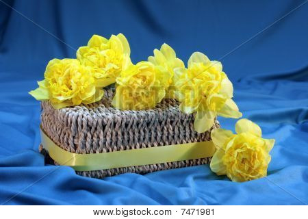 Daffodils on Basket