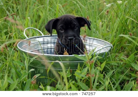 Adorable Puppy in a Tub