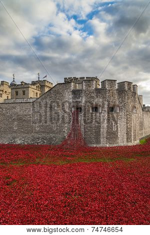 Art Installation ceramic poppies at The Tower Of London