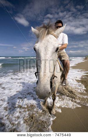 White horse on the ocean shore
