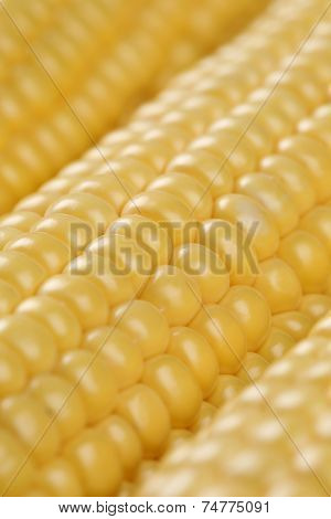 Close Up Of Corn Cobs In A Row