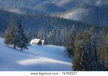 Snow-covered hut. Winter in the mountain forest sunny day. Christmas landscape. Carpathians, Ukraine, Europe