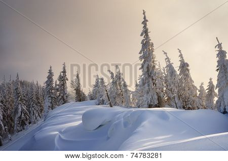 Winter forest covered with snow. New Year`s landscape. Fabulous trees in snowdrifts. Carpathian mountains, Ukraine, Europe