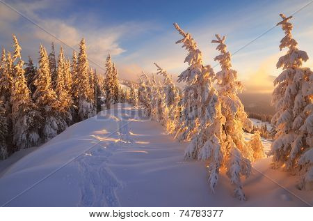 Fir trees under the snow. Mountain forest in winter. Christmas landscape. The path in the snow. Carpathian mountains, Ukraine, Europe