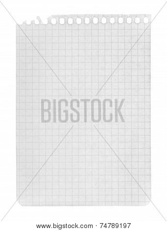 Page In A Cage Torn From A Notebook On An Isolated White Background