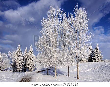 Winter landscape frosty trees