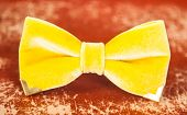 picture of bow tie hair  - bow tie yellow color - JPG