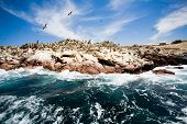 pic of ica  - Ballestas Islands - JPG