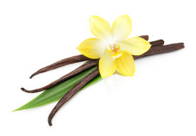 stock photo of vanilla  - Vanilla pods and orchid flower isolated on white background - JPG
