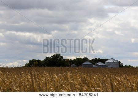 Grain Silos At The Edge Of A Field Of Ripe Corn
