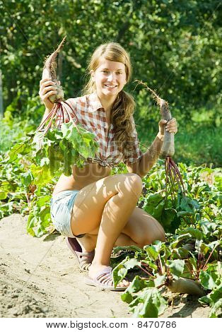 Girl Is Picking  Beetroot