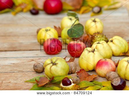 Autumn fruit - quinces