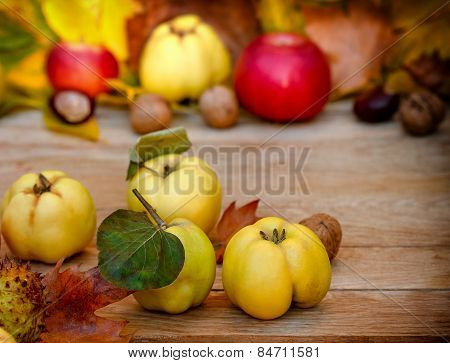Autumn harvest - Autumn fruits