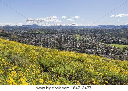Springtime Bush Sunflower wildflower field in Wildwood Regional Park above the Los Angeles suburb of Thousand Oaks, California.
