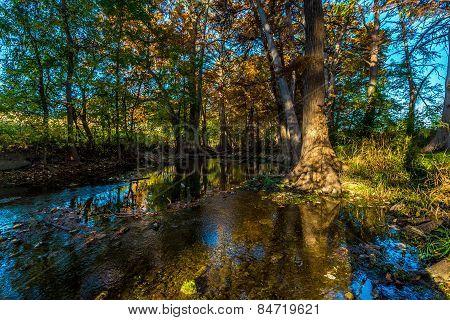 Fall Foliage on Cibolo Creek, Texas.