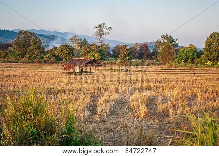 Dried Rice Field With Abandoned Farmer Hut [soft Focus]