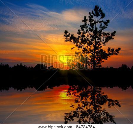 pine tree on sunset background with water reflection