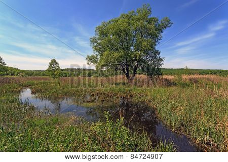 Summer scene with tree on bog