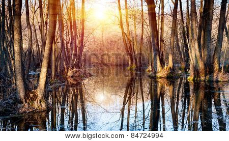 Flooded tree in forest at spring time