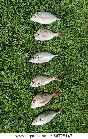 Wildlife-animals-marinelife-fish-fishing