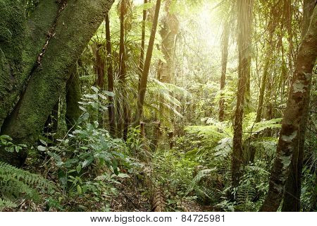 New Zealand tropical jungle forest