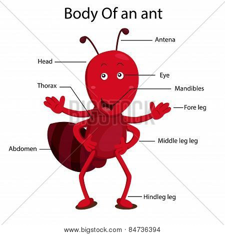 Illustrator body of ant
