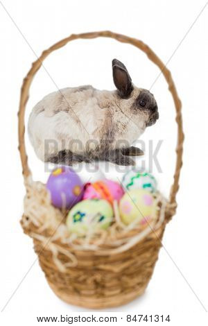 Fluffy bunny with basket of Easter eggs on white background