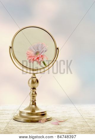 Fading beauty concept with fading flower in mirror