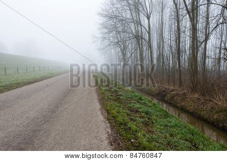 Leafless Trees Beside A Country Road