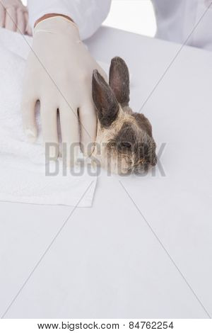 Veterinarian petting a cute rabbit in medical office
