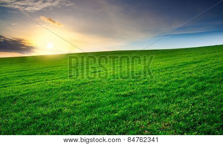 Green Young Field