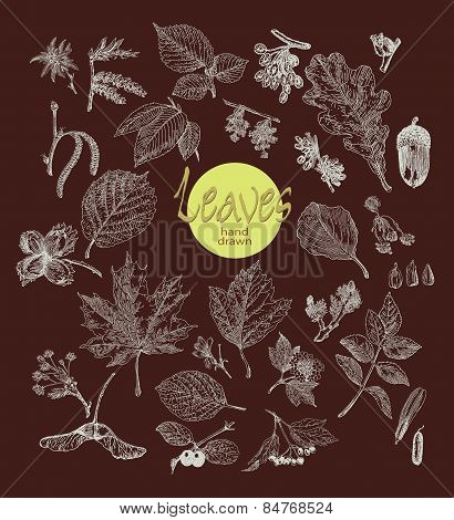 Collection of highly detailed hand drawn leaves, fruit and inflorescence  isolated on dark backgroun