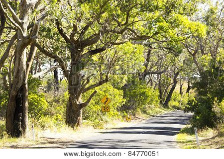 Green Road Drive Under The Shadow In Forest