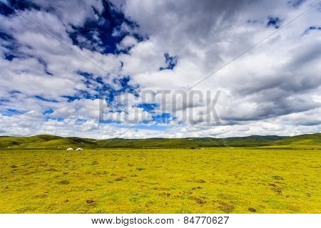 skyline,cloudscape,meadow in tibet