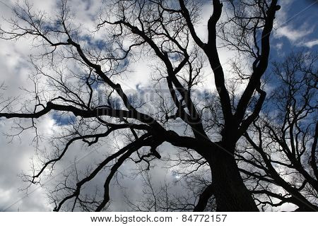 Cloudy sky seen through bare branches near Moritzburg, Saxony, Germany.