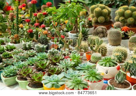 Various potted succulents and cactus plants at flower market