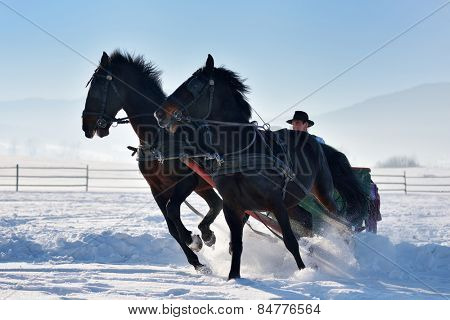 man with sledge pulled by horses outdoor in winter
