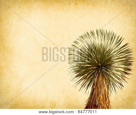 Joshua tree on Old antique vintage paper background