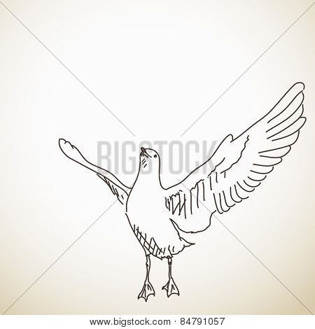 Seagull ready to fly Vector sketch Hand drawn illustration