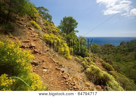 path in mountains near hot sea at daylight with bushes