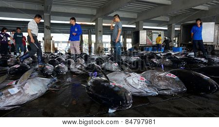 Buyers Inspect Tuna Fish Before Bidding In Donggang Taiwan