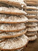 pic of cocoon  - Baskets with silkworm cocoons at a silk factory - JPG