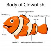 foto of clown fish  - Illustrator body of clown fish cartoon and educationo - JPG
