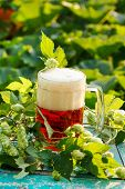stock photo of hop-plant  - hops with beer  - JPG