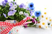 foto of flower pot  - blue campanula flowers in flower pot and other flowers - JPG