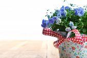 stock photo of flower pots  - blue campanula flowers in flower pot on wooden background - JPG