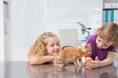 stock photo of petting  - Smiling owners petting their cat in medical office - JPG