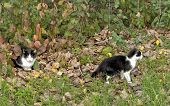 image of pry  - cat looks at the camera while her young pries the environment - JPG