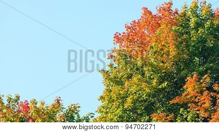 Autumn Trees. Fall Tree Against The Blue Sky.