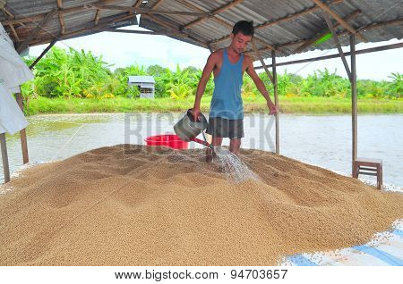 An Giang, Vietnam - August 25, 2011: A Farmer Is Preparing To Feed Pangasius Catfish In His Farm Pon